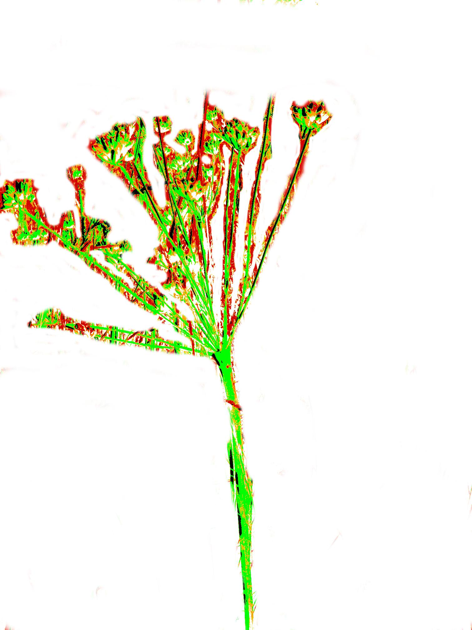 logo KEXMIN Lomatium nudicaule