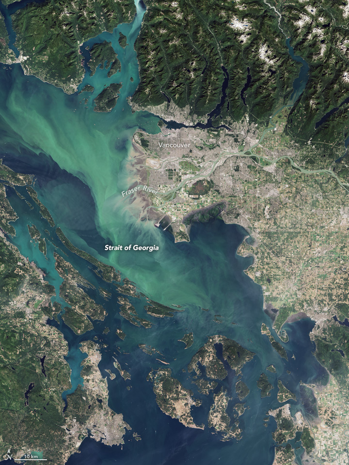 Salish Sea phytoplankton bloom August 19, 2016