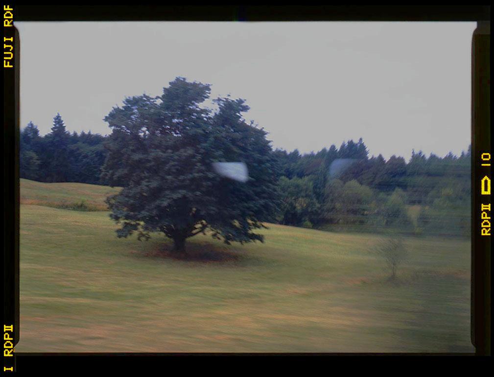 2 bigleaf maple N Cowichan e&n July 1996 Gordon Brent Ingram