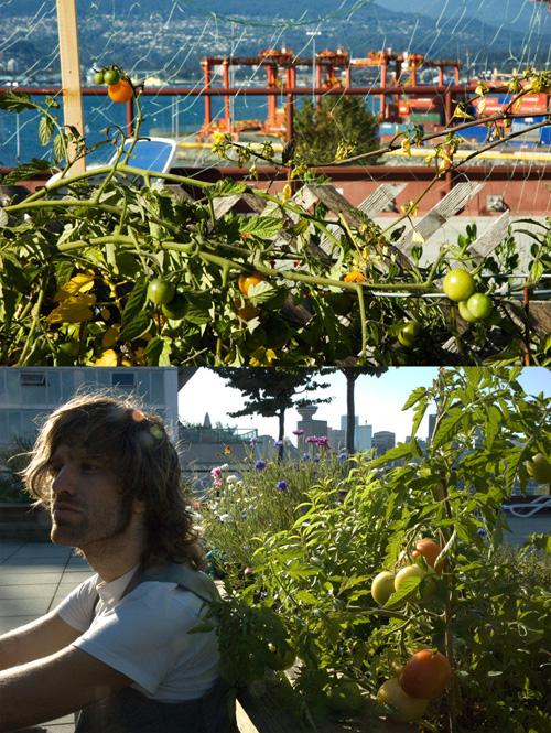 tomatoes and port and Patrick Blaeser 27 9 2009 Railtown Studios green roof Vancouver by Gordon Brent Ingram