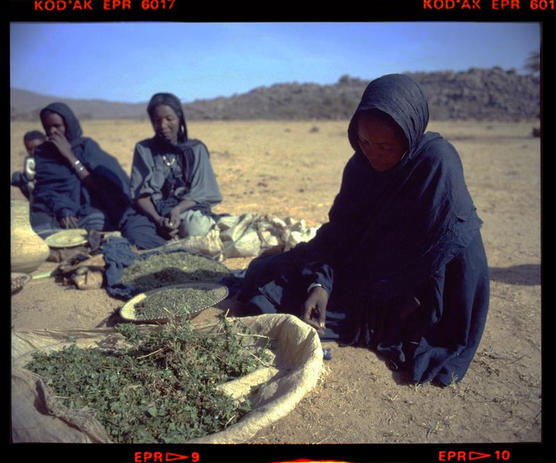 Tuareg herb sellers Egharghar Bagzane Plateau Air Mtns Nov 1986 Gordon Brent Ingram