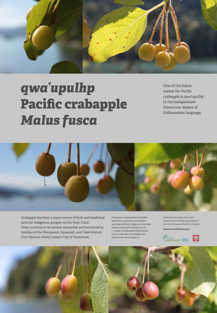 2016-sept-qwaupulhp-crabapple-castle_grunenfelder_ingram