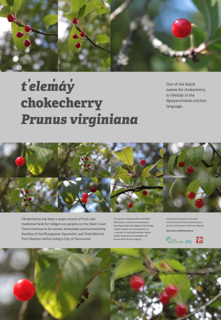 2016-sept-telemay-chokecherry-castle_grunenfelder_ingram